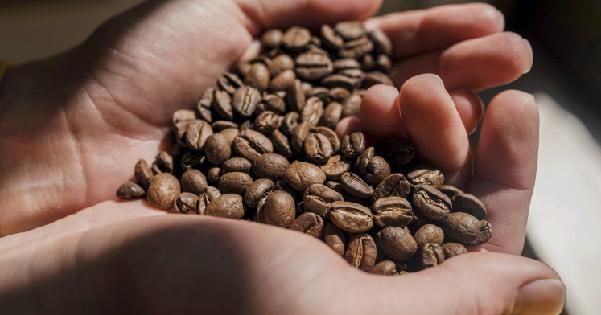 振泰檢驗-咖啡豆檢驗2